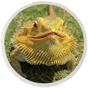 Round Beach Towel featuring the photograph  Smiling Bearded Dragon  by Susan Leggett