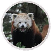 Smiling Red Panda #2 Round Beach Towel