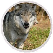 Smiling Wolf Round Beach Towel