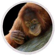 Cute Young Orangutan Round Beach Towel