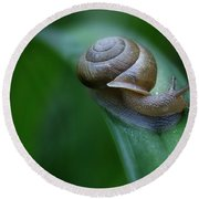 Snail In The Morning Round Beach Towel