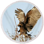 Snail Kite Coming In Round Beach Towel