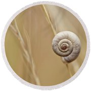 Snail On Autum Grass Blade Round Beach Towel