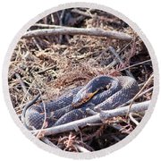 Round Beach Towel featuring the photograph Snake by Ester Rogers