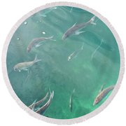 Snappa Fish, Pacific Ocean Round Beach Towel by Yurix Sardinelly
