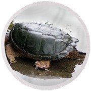 Snapping Turtle Round Beach Towel