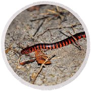 Round Beach Towel featuring the photograph Snazzy Snake by Al Powell Photography USA