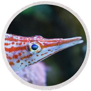 Snooty The Hawkfish Round Beach Towel