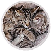 Snoring Purrs Of Kitten Brothers Round Beach Towel