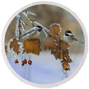 Snow Chickadees Round Beach Towel