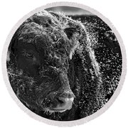Snow Covered Ice Bull Round Beach Towel