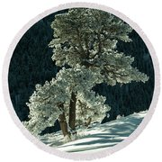 Snow Covered Tree - 9182 Round Beach Towel
