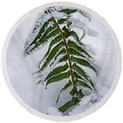 Round Beach Towel featuring the photograph Snow Fern - 365-288 by Inge Riis McDonald