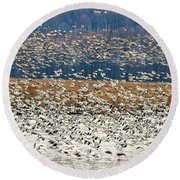 Round Beach Towel featuring the photograph Snow Geese At Willow Point by Lois Bryan