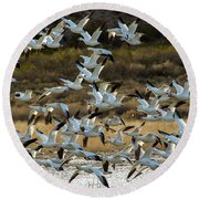 Snow Geese Flock In Flight Round Beach Towel