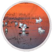 Snow Geese On Water Round Beach Towel