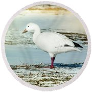 Round Beach Towel featuring the photograph Snow Goose - Frozen Field by Robert Frederick
