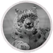 Round Beach Towel featuring the photograph Snow Leopard  Bw by Sandy Keeton