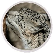 Round Beach Towel featuring the photograph Snow Leopard by Lisa L Silva