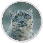 Round Beach Towel featuring the photograph Snow Leopard Portrait by Sandy Keeton