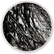 Snow On Pine Boughs Round Beach Towel by Timothy Bulone