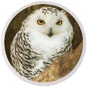 Snow Owl Round Beach Towel