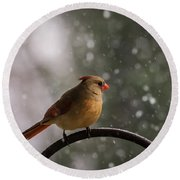 Round Beach Towel featuring the photograph Snow Showers Female Northern Cardinal by Terry DeLuco