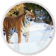 Snow Tiger Round Beach Towel by Steve McKinzie
