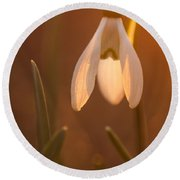 Round Beach Towel featuring the photograph Snowdrop by Davorin Mance