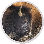 Snowy Bison Round Beach Towel