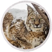 Snowy Bobcat Round Beach Towel