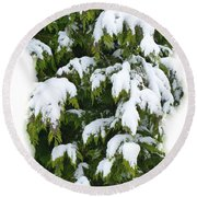 Round Beach Towel featuring the photograph Snowy Cedar Boughs by Will Borden