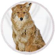 Snowy Coyote Round Beach Towel