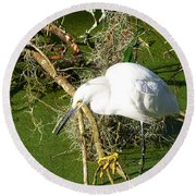 Round Beach Towel featuring the photograph Snowy Egret 003 by Chris Mercer