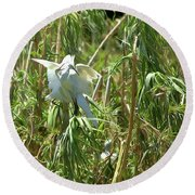 Snowy Egret Feeding Its Young - Digitalart Round Beach Towel