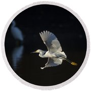 Snowy Egret In Flight In The Morning Light Round Beach Towel