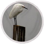 Snowy Egret In The Fog  Round Beach Towel