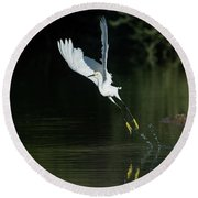 Snowy Egrets 080917-4290-1cr Round Beach Towel