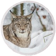 Snowy Lynx Round Beach Towel