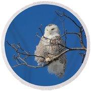Snowy Owl 7 Round Beach Towel