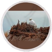 Snowy Owl In Dunes Round Beach Towel