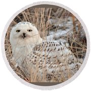 Snowy Owl Round Beach Towel by Nancy Landry