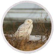 Snowy Owl On Cape Cod Round Beach Towel