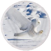 Snowy Owl Pouncing Round Beach Towel
