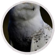Snowy Owl Profile Round Beach Towel