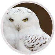 Snowy Owl Round Beach Towel by Steve Stuller
