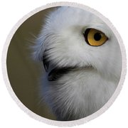 Snowy Owl Up Close Round Beach Towel