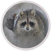 Snowy Raccoon Round Beach Towel