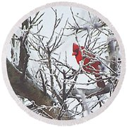 Snowy Red Bird A Cardinal In Winter Round Beach Towel