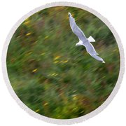 Soaring Seagull Round Beach Towel